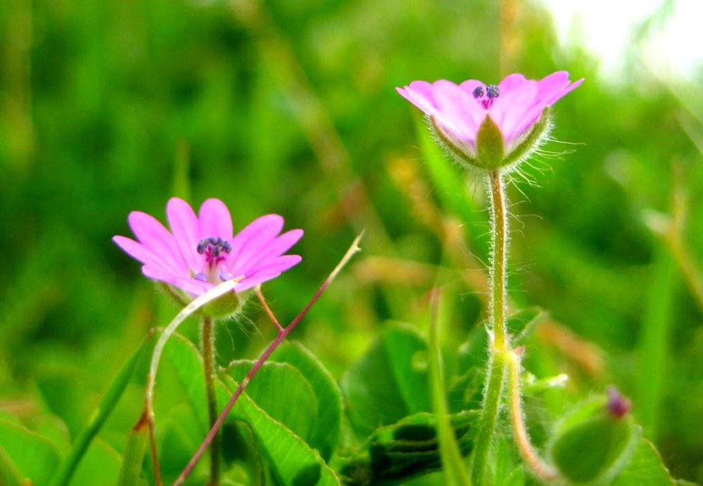 Little purple flower3