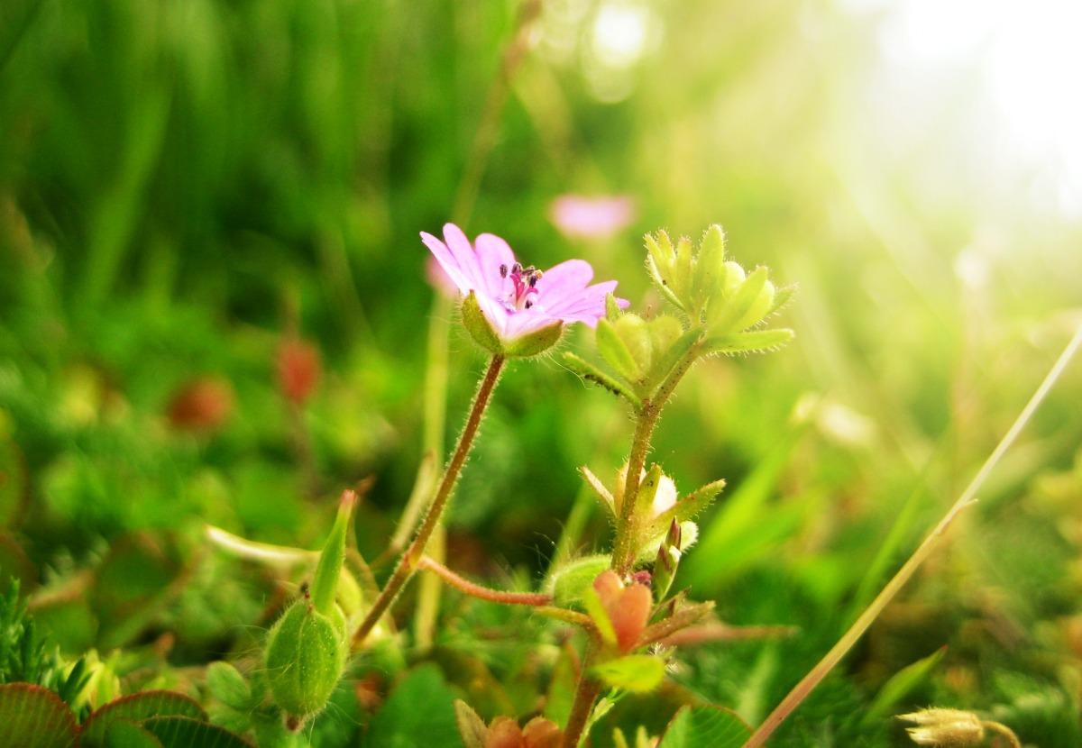 Wat ik hoop, maar wat niet kan – tussen hoop en wanhoop (1)