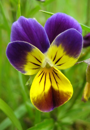 Little purple flower6