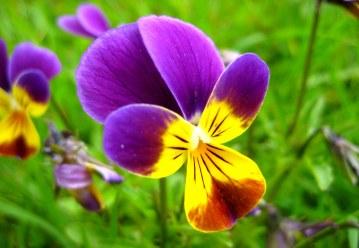 Little purple flower7